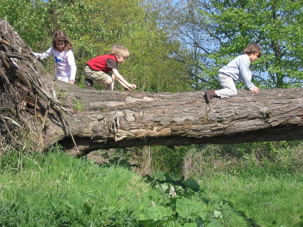 Start natuurspeelplek bruchems bos: kinderen en ouders welkom ...